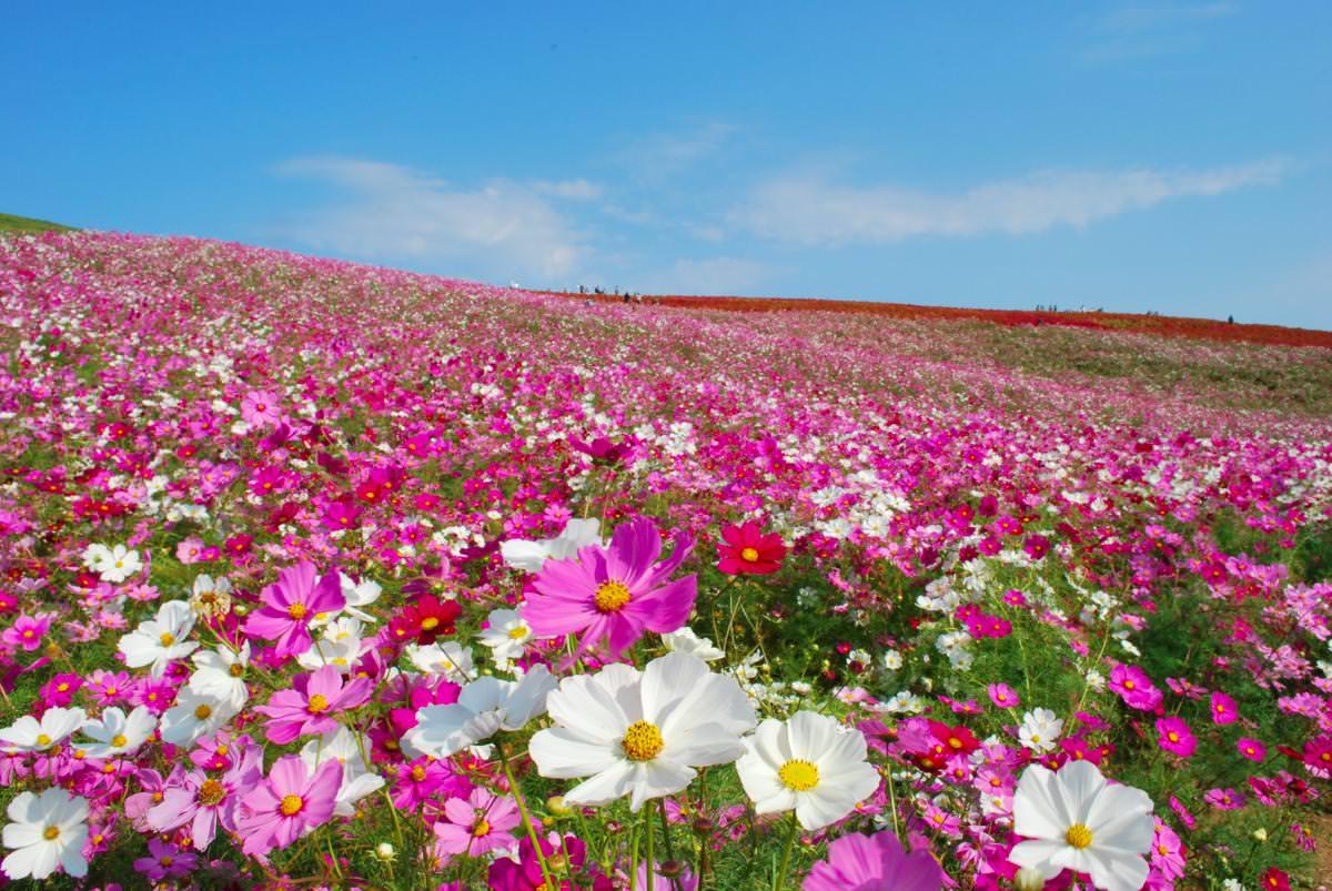 Hasil gambar untuk hitachi seaside park